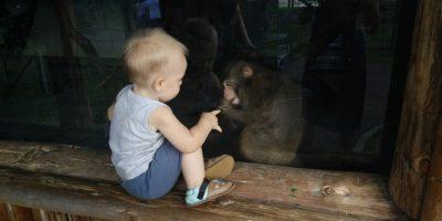 Gradina Zoologica din Oradea